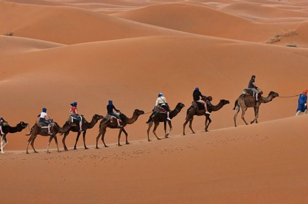 Take A Look To The Whole Desert With The Camel Ride Dubai