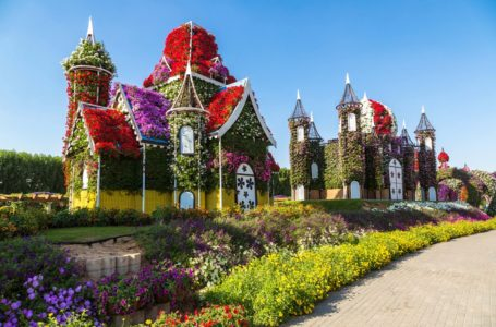 Dubai Miracle Garden : The Power of The Flower