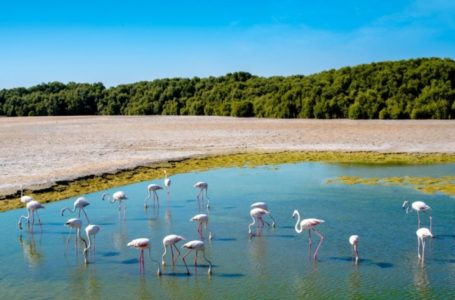 Witness Amazing Wildlife At Dubai's First Tropical Forest