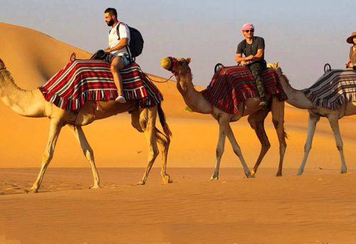 Верблюды ездить