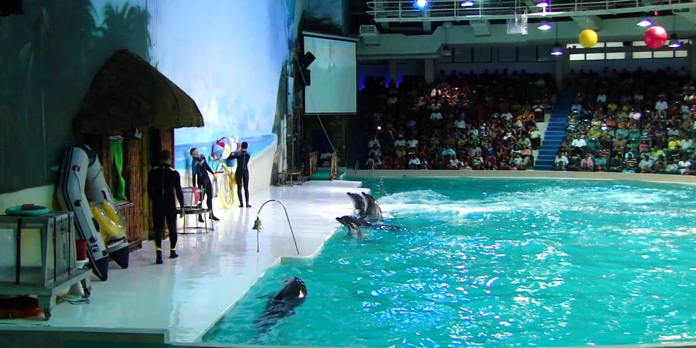 Dolphin Show3